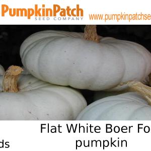Flat White Boer Ford pumpkin seeds