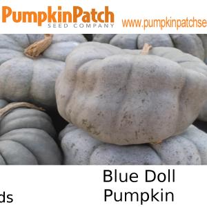 Blue Doll Pumpkin Seeds
