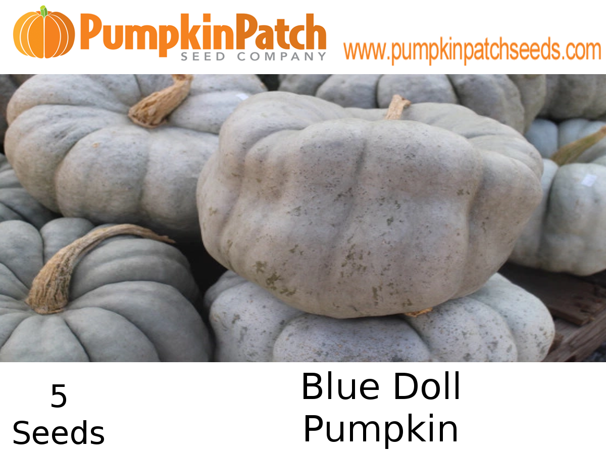 Blue Doll Pumpkin Seeds