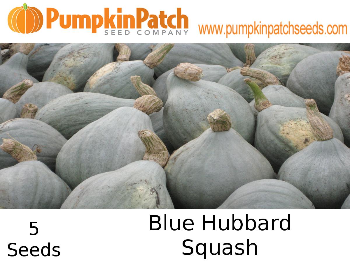 Blue Hubbard Squash Seeds
