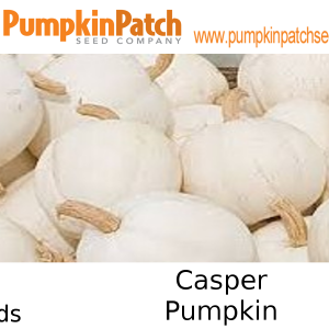 Casper Pumpkin Seeds