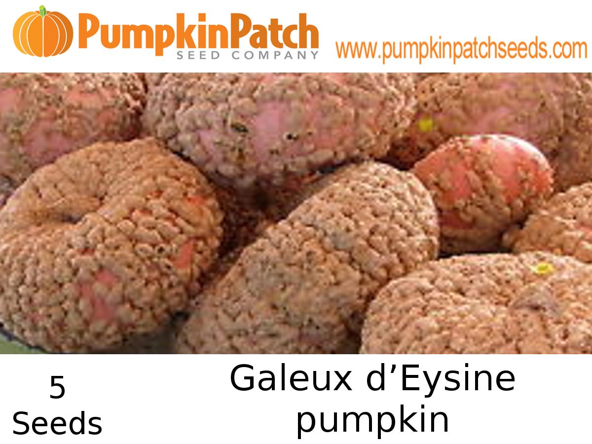 Galeux d'Esine Pumpkin Seeds