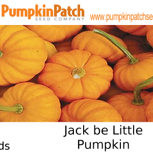 Jack be Little Pumpkin Seeds