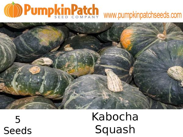 Kabocha Squash Seeds