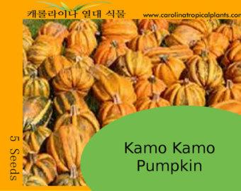 Kamo Kamo Pumpkin