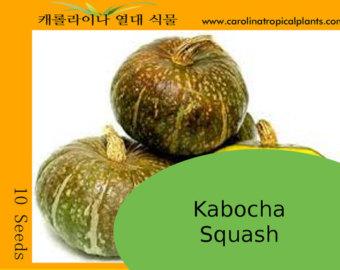 Kobocha Squash
