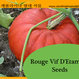 Rouge Vif D'Etampes Pumpkin Seeds
