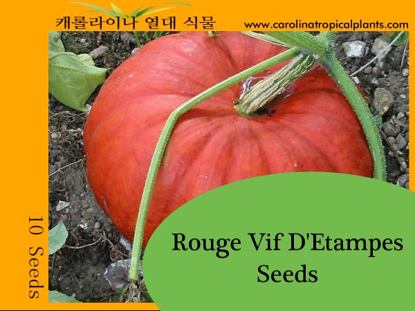 Rouge Vif D'Etampes Pumpkin Seeds