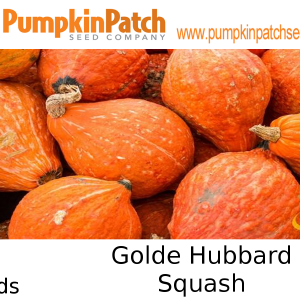 Golden Hubbard Squash Seeds