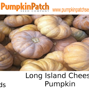 Long Island Cheese Pumpkin Seeds