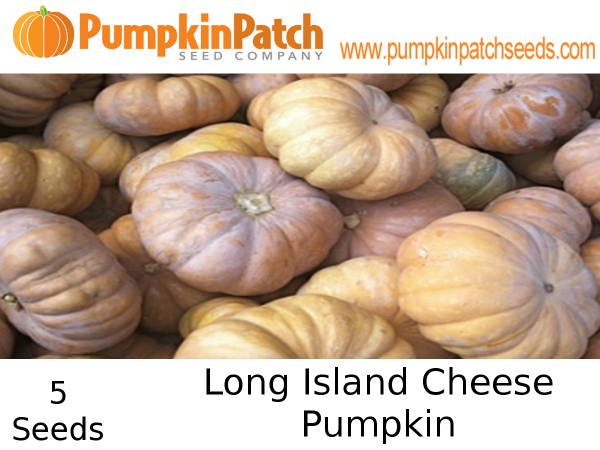 Long Island Cheese Pumpkin Seeds