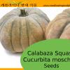 Calabaza Squash - Cucurbita moschata - 10 Seeds