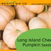 Long Island Cheese Pumpkin Seeds - 10 Seeds