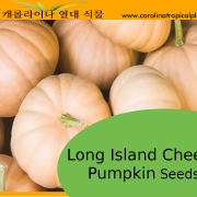 Long Island Cheese Pumpkin Seeds - 10 Seeds