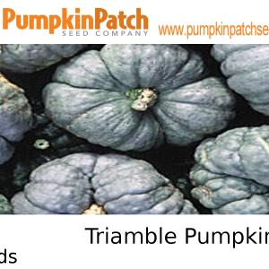 Triamble Pumpkin Seeds