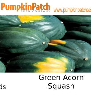 Green Acorn squash seeds