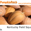Kentucky field squash