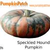 Speckled Hound Pumpkin - 5 Seeds