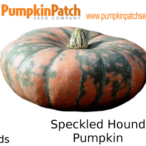 Speckled Hound Pumpkin - 5 Seeds