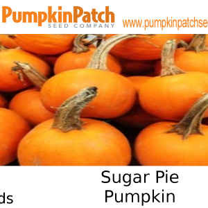 Sugar Pie Pumpkin seeds