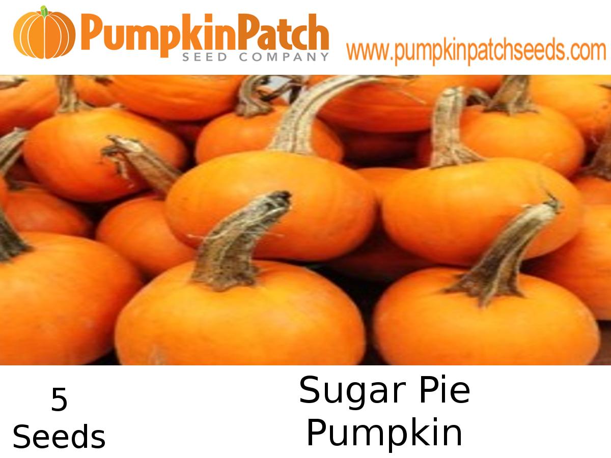 Sugar Pie Pumpkin seeds