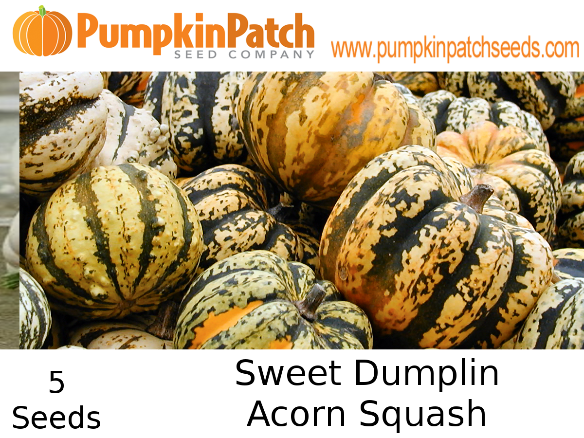 Sweet Dumplin Acorn Squash seeds for sale