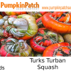 Turks Turban squash seeds for sale