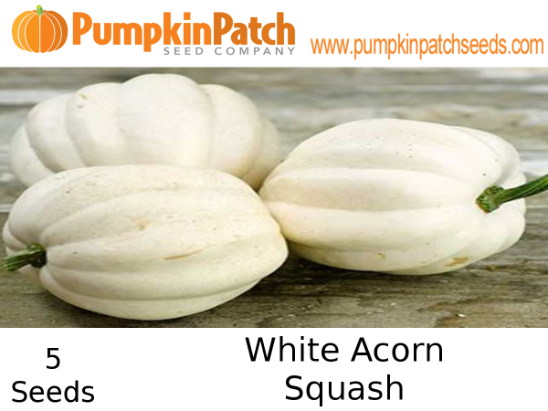 White Acorn squash seeds for sale